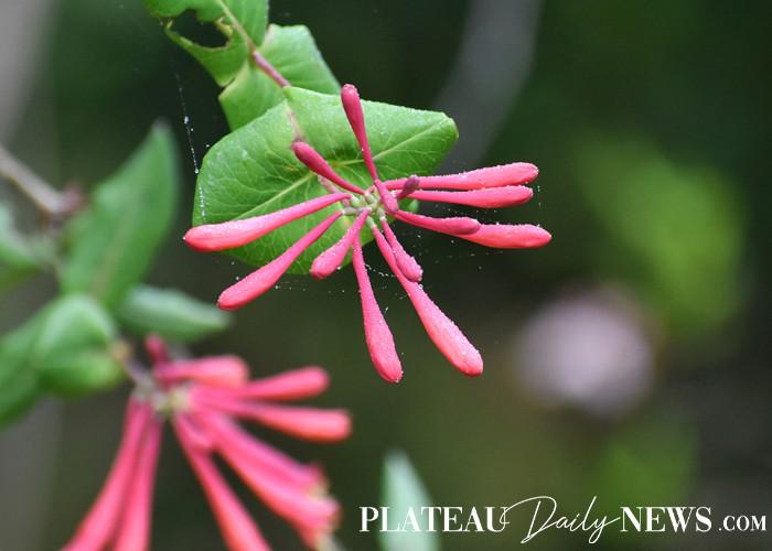 Botanical.Garden (3).jpg