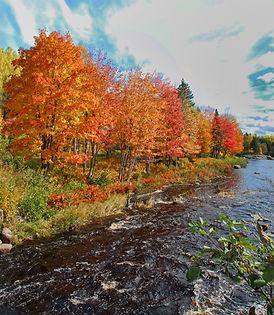autumn-2378435.jpg