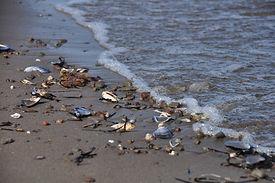 beach-289601.jpg