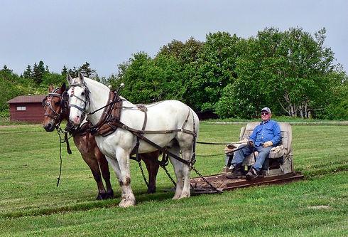horses-2397030_1280.jpg