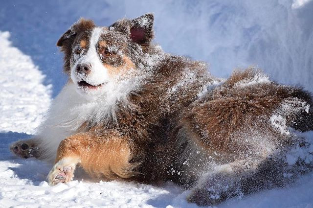 _Has anyone seen the snow__