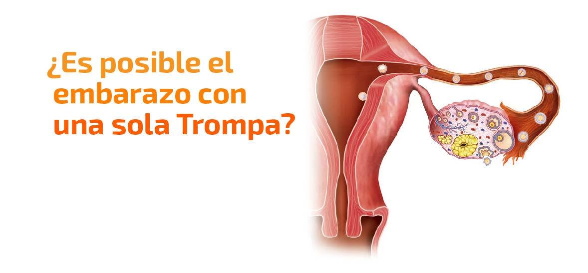 Trompas de Falopio: ¿Es posible el embarazo con solo una trompa?