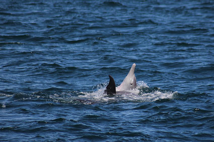 dolphins west coast australia