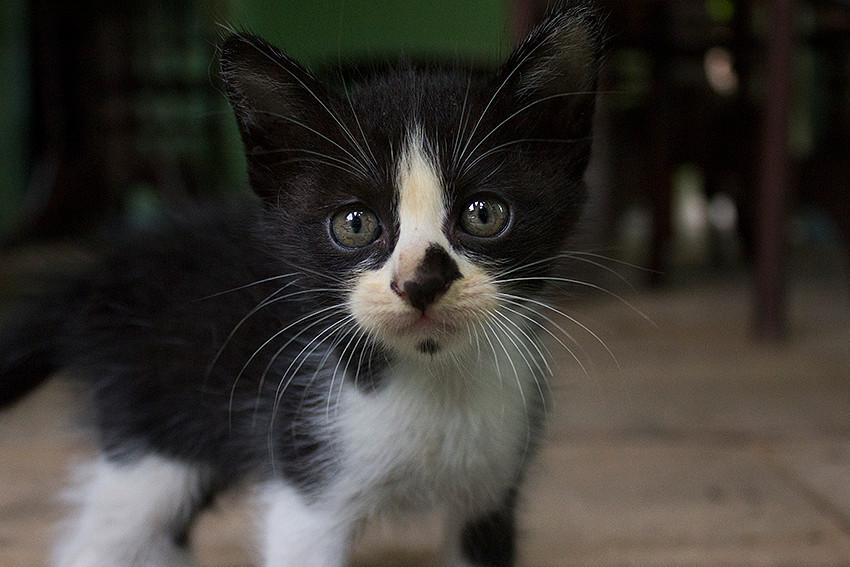 IMG_6392_kitten.jpg