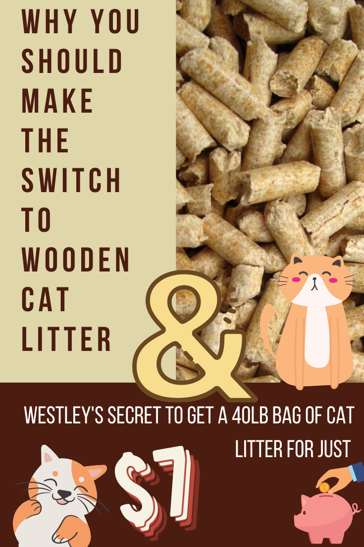Why you should make the switch to Wooden Cat Litter