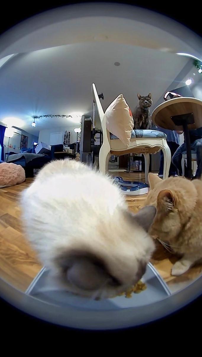 Instachew Smart Pet Feeder app shows three cats eating