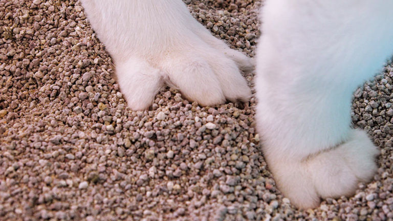 Cat Stepping in Clay Cat Litter Pellets