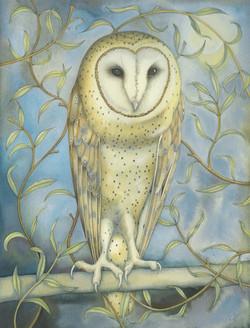 Barn Owl among the Willow