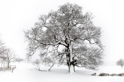 A winter's tree