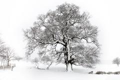 A winter's tree