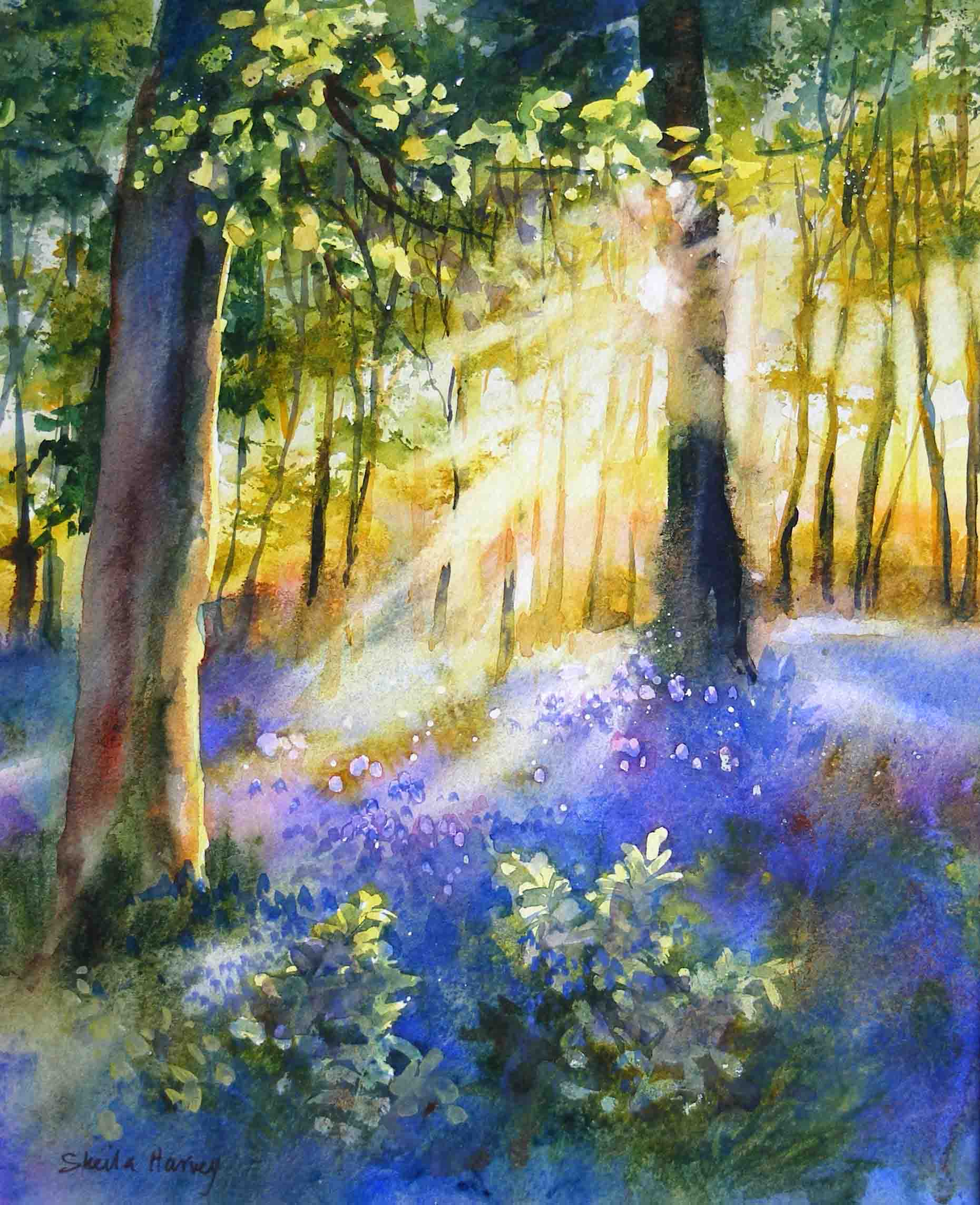 13 Sunlight & Bluebells