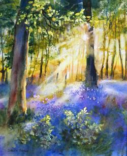 13 Sunlight & Bluebells