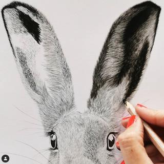 Hare in progress