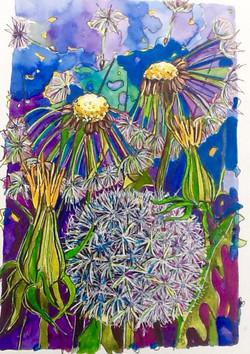 Sue Johnston dandelion