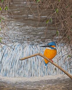 Kingfisher at Metton