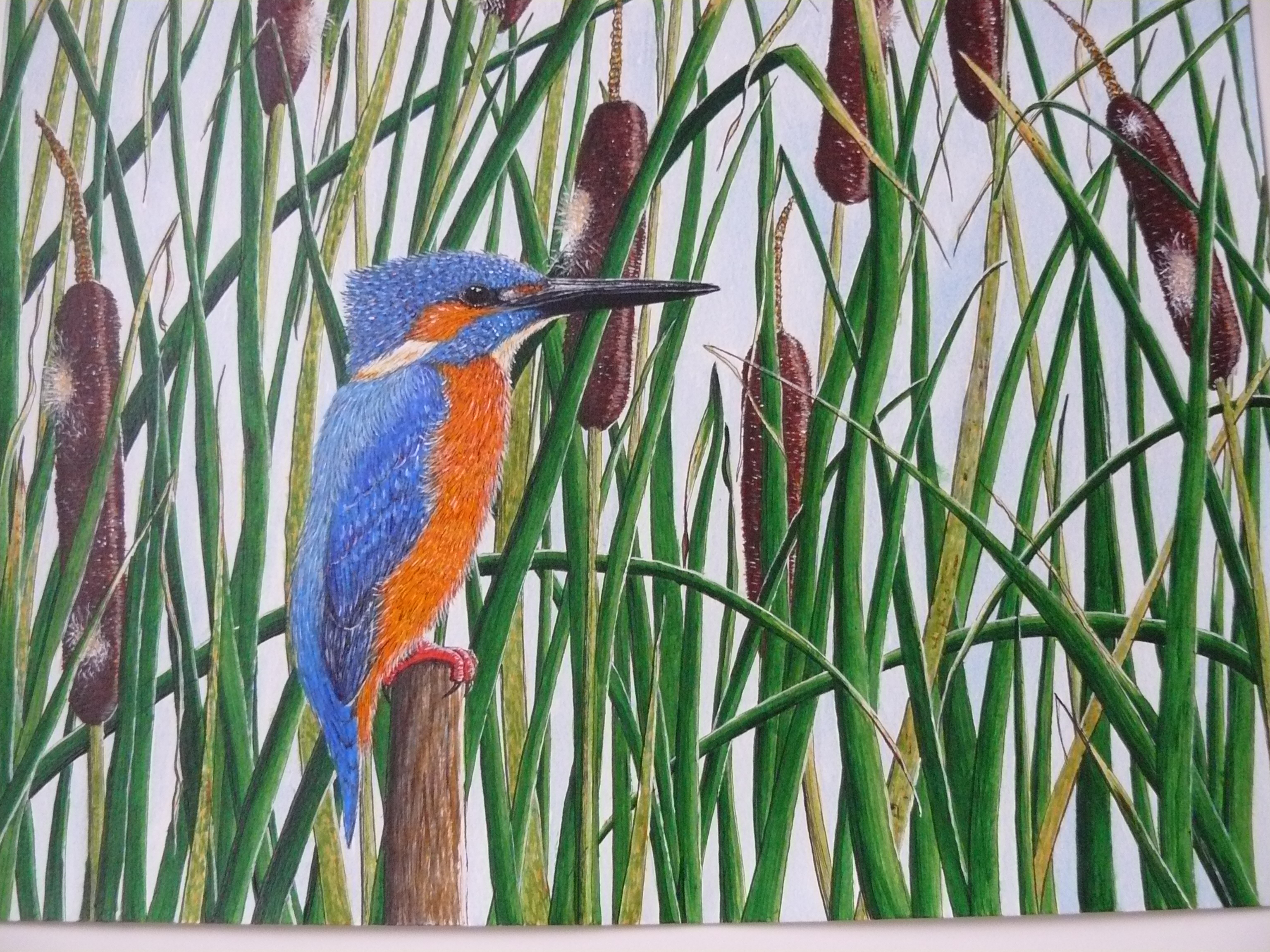 Kingfisher in reedmace