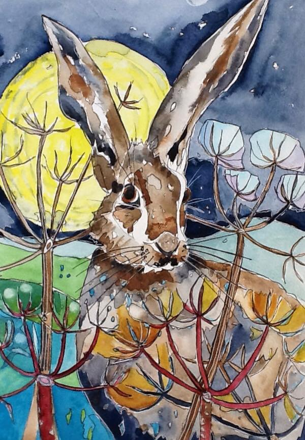 Hare watercolour Sue Johnston