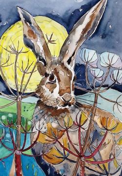 Hare watercolour Sue Johnston