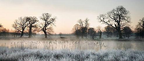 Gunton Park. David Morris
