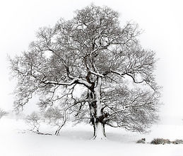 a winters tree DM.jpg