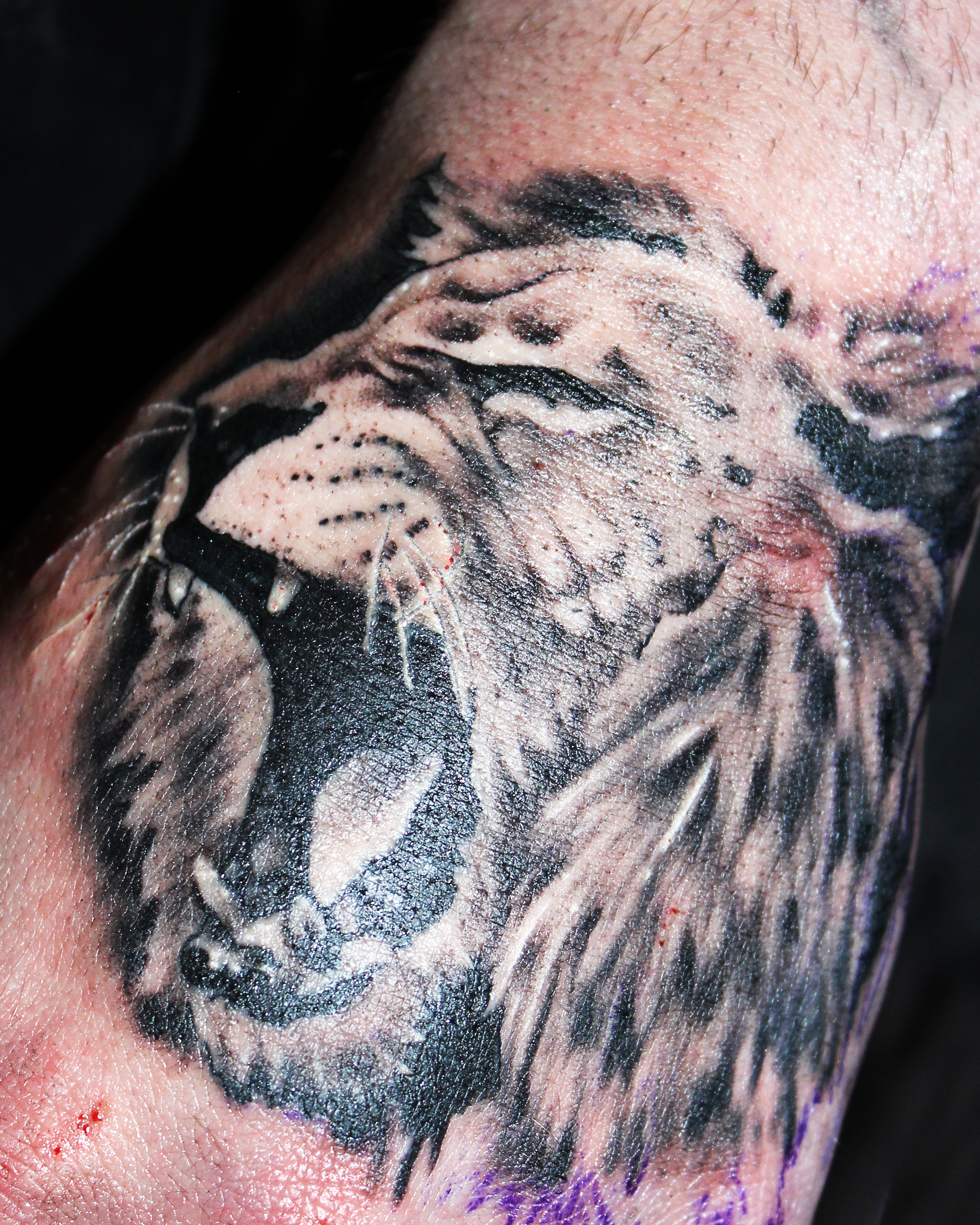 Lion tattoo.Tattooist in Somerset