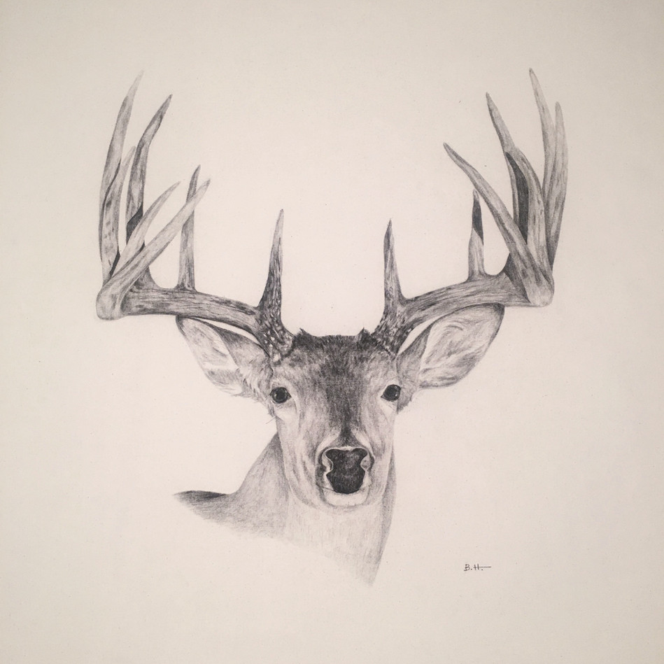 """42"""" x 52"""" 