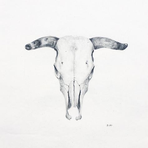 Cow Skull 1.JPG