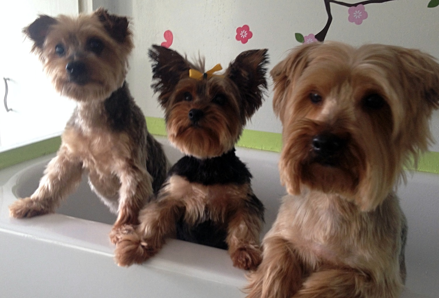 Three Pups in Tub