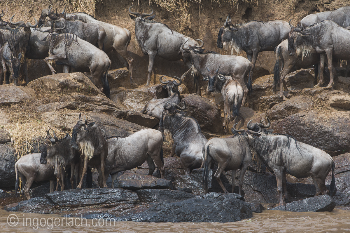 The great Migration_D3S3035