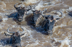 The great Migration_D3S8260