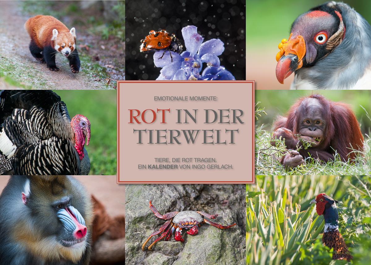 Kalender Rot in der Tierwelt