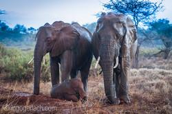 Elefanten im Regen_IGB7687