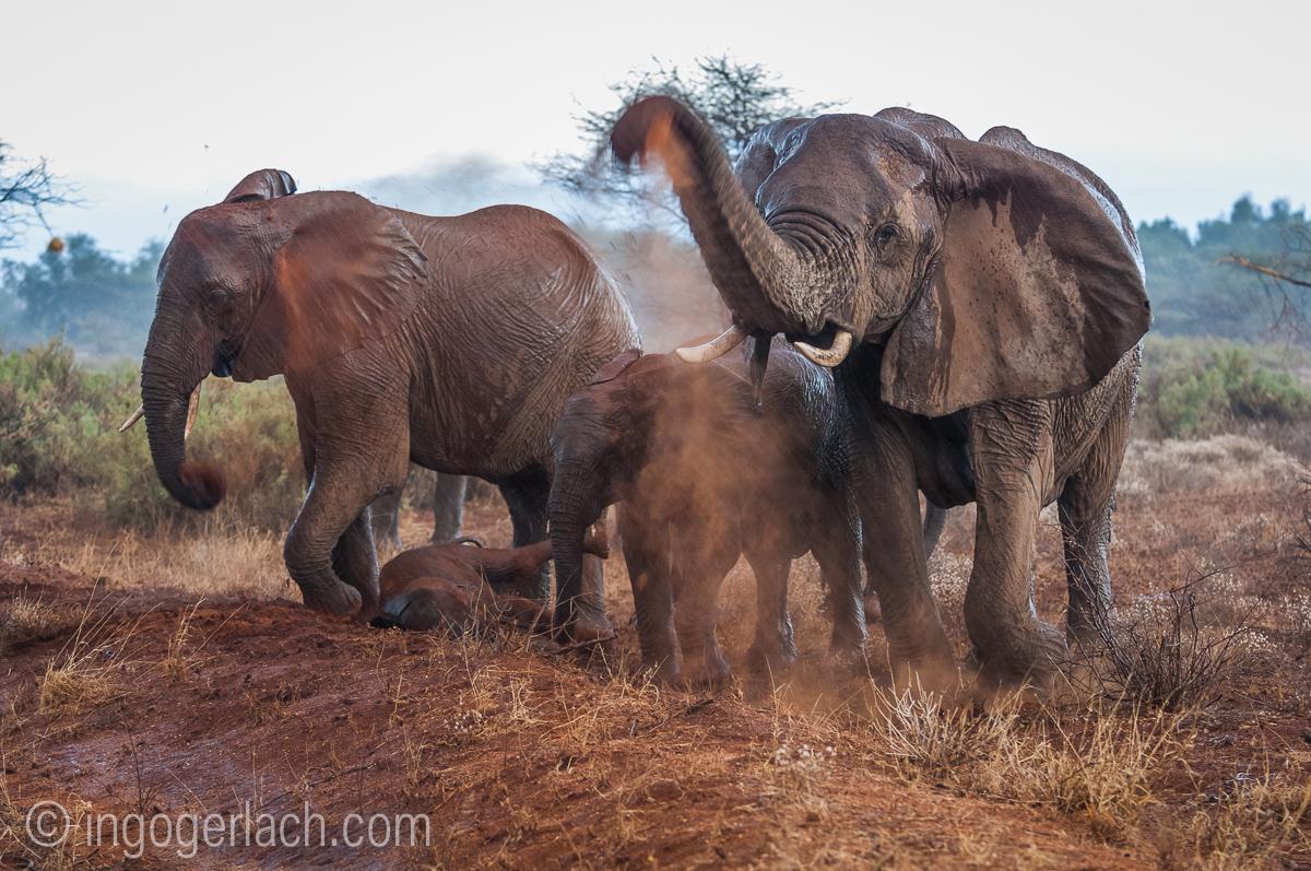 Elefanten im Regen_IGB7640