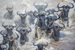 The great Migration_D3S8903