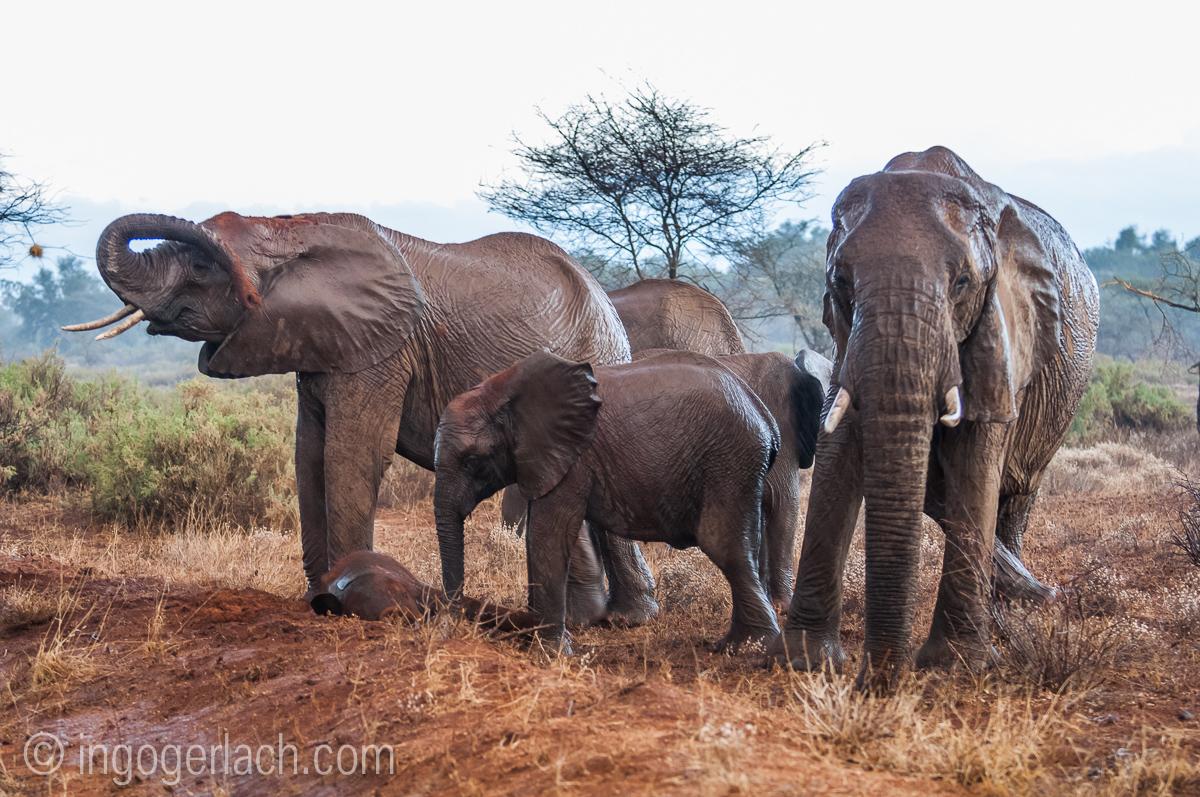 Elefanten im Regen_IGB7634