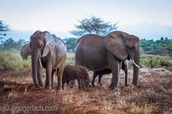 Elefanten im Regen_IGB7726