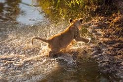 Der Mut der kleinen Löwen_IWG4481