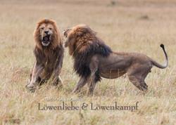 Kalender Löwen