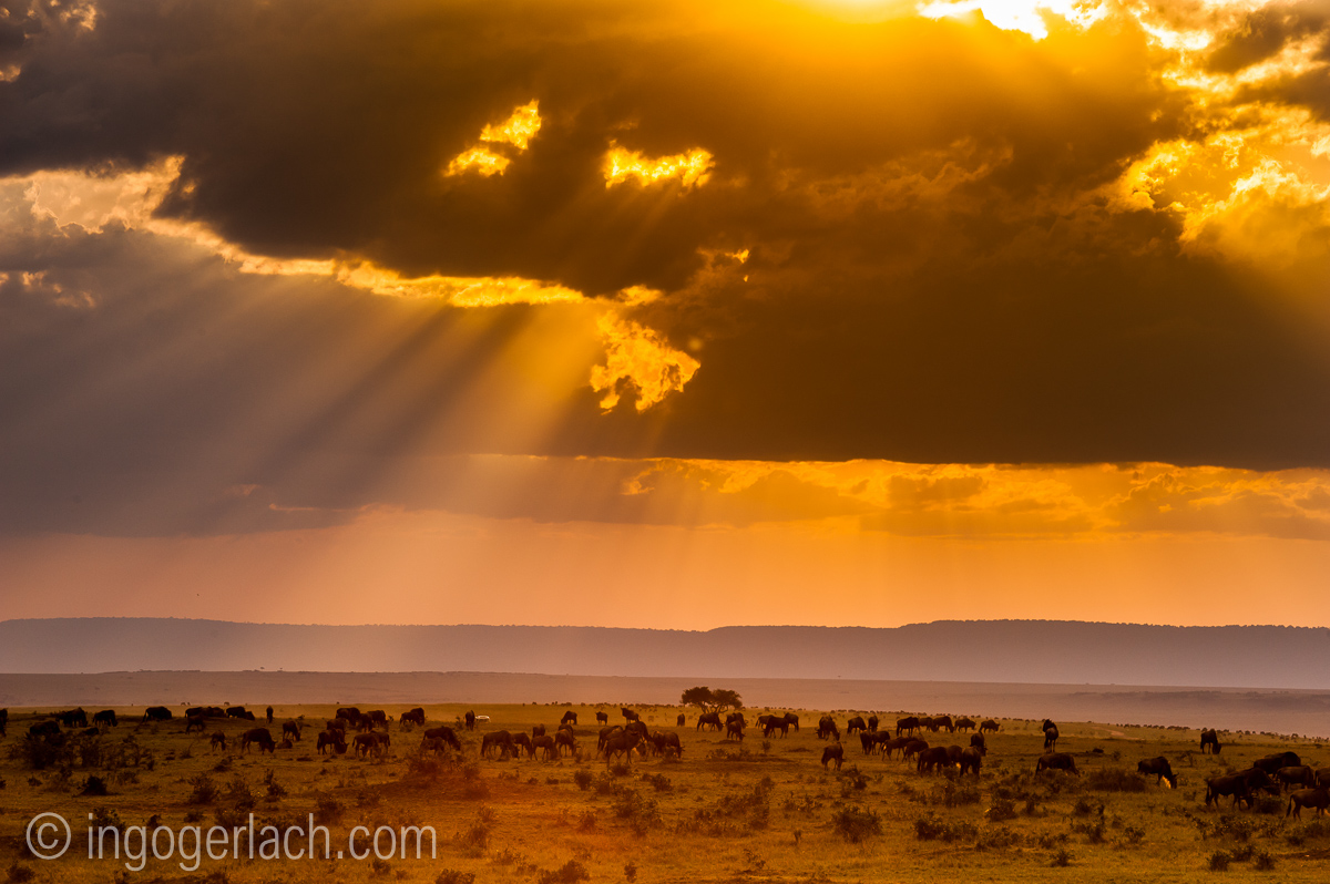 The great Migration_IG35326
