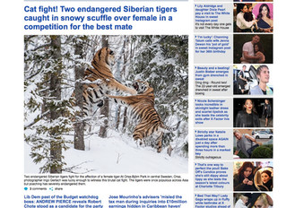 """Mein """"Tiger-Fight"""" in Daily Mail..."""