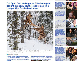 "Mein ""Tiger-Fight"" in Daily Mail..."