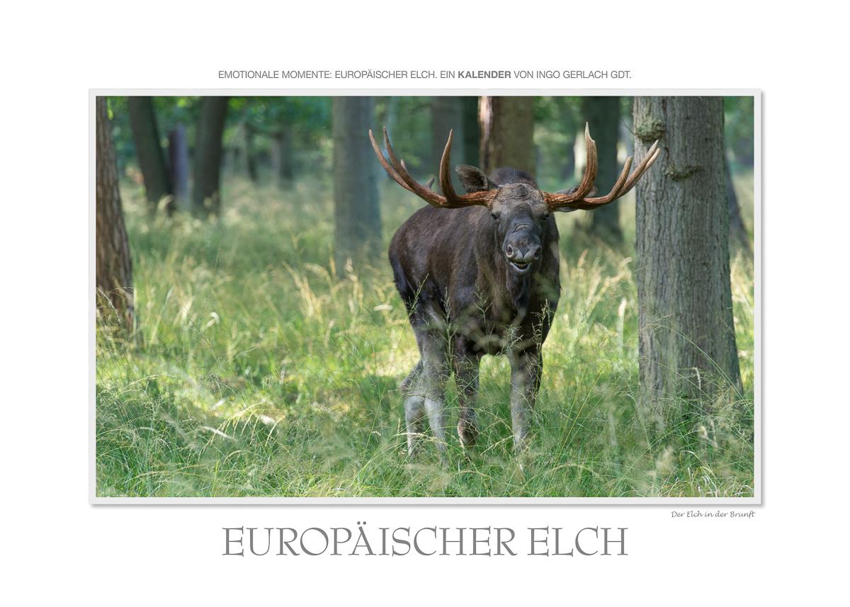 Kalender Elche