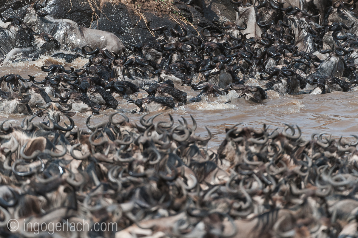 The great Migration_IG36977