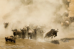 The great Migration_IGB6702