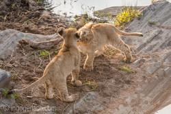 Der Mut der kleinen Löwen_IWG4457