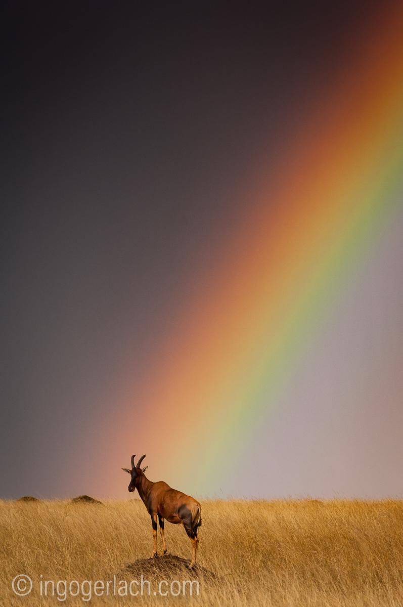 Over the Rainbow_Topi_IWG0012