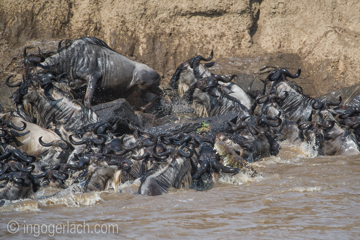 The great Migration_D3S2713