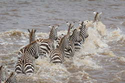 The great Migration_D3S3781