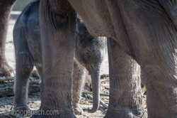 Baby_elephant_Zoo_Cologne_D50_2857