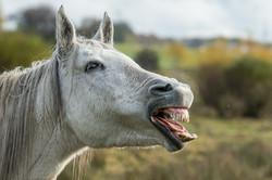 Pferd © Ingo Gerlach_D8N7676